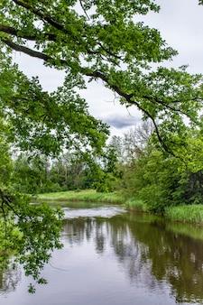 Ramo di quercia contro il fiume ogre. foresta verde sulla riva. lettonia natura in