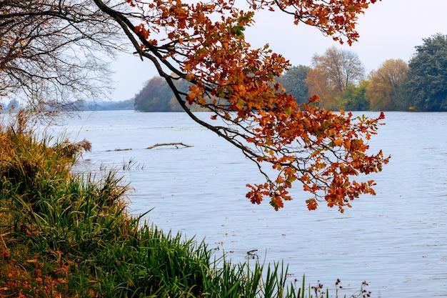 Ramo di quercia con foglie secche in riva al fiume, vista autunnale