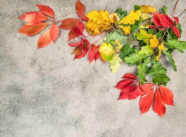 Foglie di autunno di quercia e acero