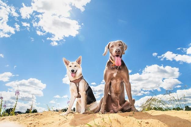 Cani obbedienti contro il cielo nuvoloso. la luce del sole nella fotocamera