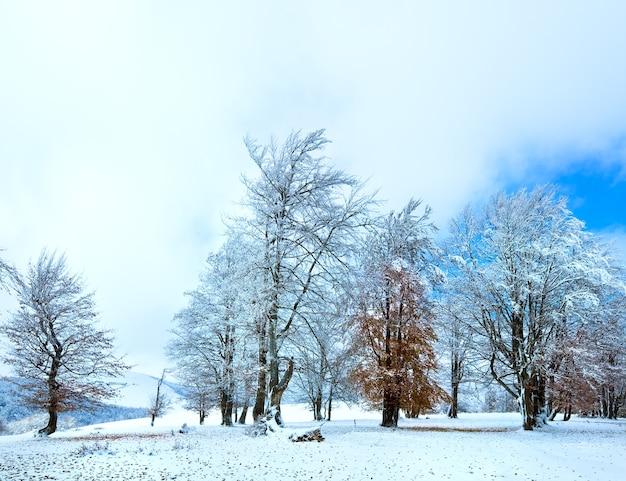 Ottobre bosco di faggi di montagna con la prima neve invernale e le ultime foglie autunnali finite