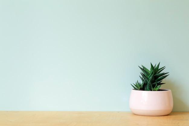 Tavolo da ufficio con una pianta sullo sfondo di una parete colorata vuota. tavolo ufficio domestico e concetto di sfondo sul posto di lavoro. foto di alta qualità