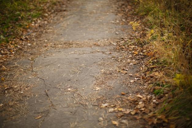 Vecchia strada asfaltata ricoperta di foglie autunnali e aghi di pino