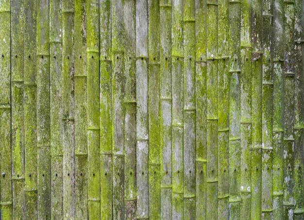 Vecchio sfondo di bambù. muro o recinzione in bambù vecchio. texture di legno vecchio con muschio e muffa