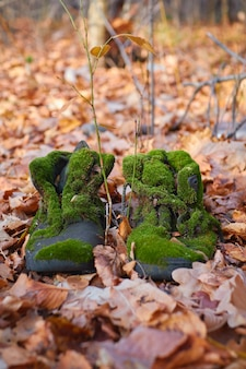 Vecchi stivali coperti di muschio nella foresta di autunno