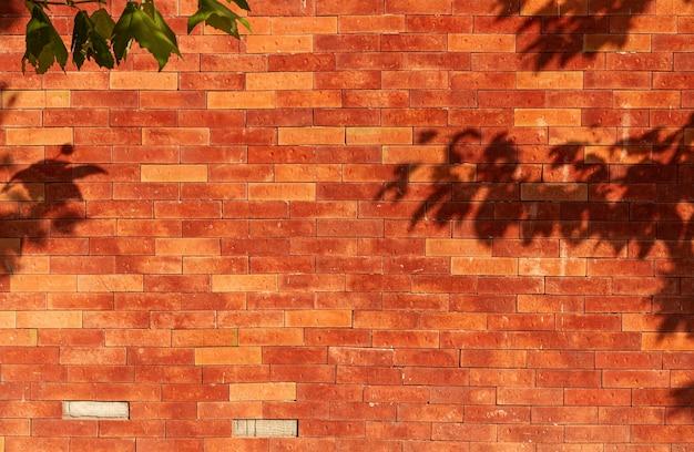 Vecchio muro di mattoni con ombre di foglie