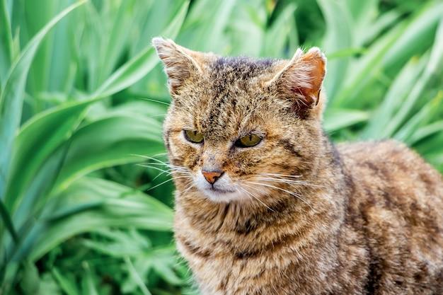 Vecchio primo piano del gatto contro erba verde_