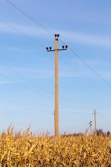 Vecchio pilastro di cemento con fili elettrici ad alta tensione situati sul territorio del mais maturato nel campo