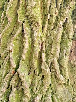Vecchio cracking corteccia di legno texture closeup modello naturale tronco d'albero grigio