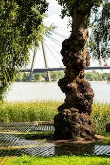Vecchio albero storto nel parco vicino a una passerella di pietra per una passeggiata contro il cielo e un ponte sul fiume