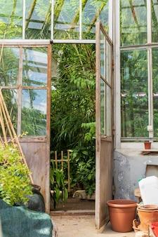 Vecchi vasi di terracotta vuoti per piante da appartamento che crescono fuori dalla serra con diverse piante tropicali