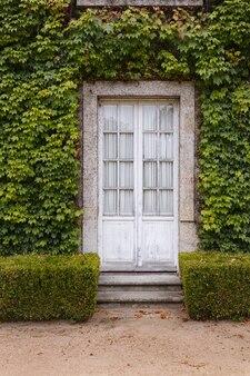 Vecchia porta di vetro circondata da piante rampicanti