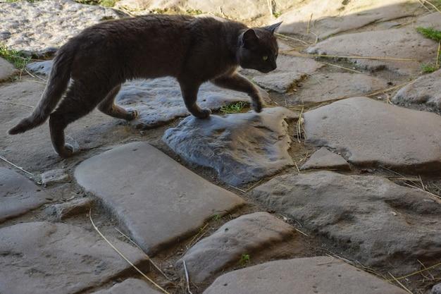 Un vecchio gatto grigio senzatetto cammina lungo il vecchio pavimento di pietra con pietre di varie forme. vista laterale