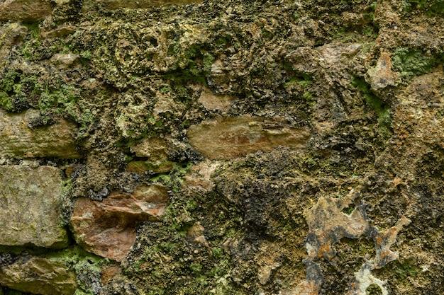 Vecchia struttura del muro di cemento verde