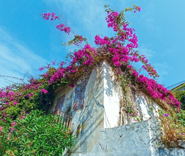 Vecchia casa con albero in fiore sul tetto.