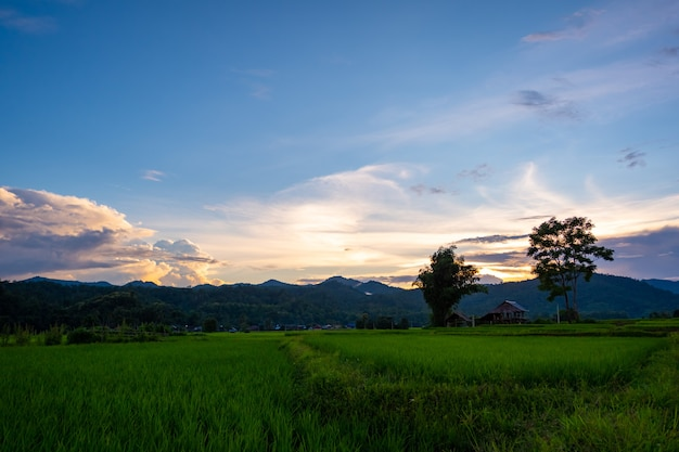 Vecchia capanna nel mezzo del campo agricolo verde con terrazza di riso durante il cielo al tramonto in thailandia