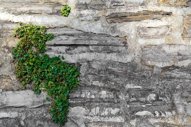 Un vecchio muro coperto di edera in una casa di pietra in una strada a varenna una piccola cittadina sul lago di como italia