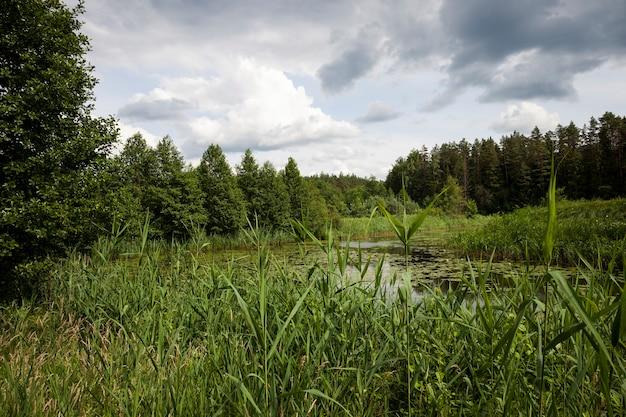 Vecchio lago con ninfee in crescita