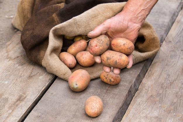 Mano di uomo anziano con patate fresche raccolte con terreno ancora sulla pelle, fuoriuscita di un sacchetto di tela da imballaggio, su una tavolozza di legno grezzo.