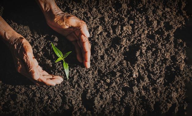 La mano di un vecchio che pianta un albero, il concetto di preservare la natura per il futuro dell'umanità. concetto di csr