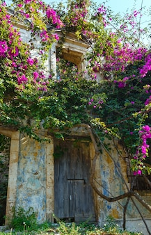 Vecchia casa trascurata con albero in fiore sul tetto.