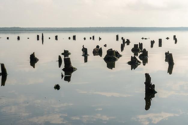 Vecchie palificazioni nel lago paliastomi, poti, georgia. paesaggio