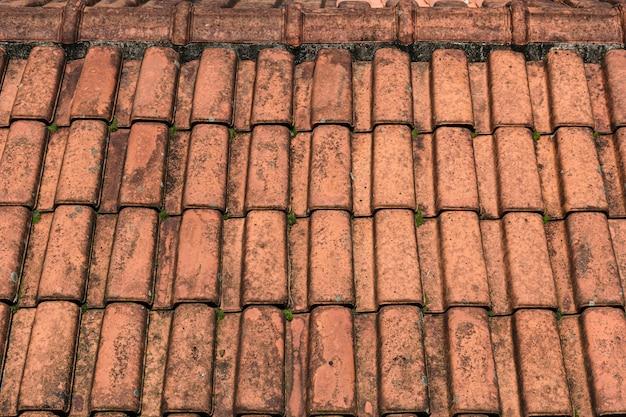 Vecchia struttura del tetto con melma verde