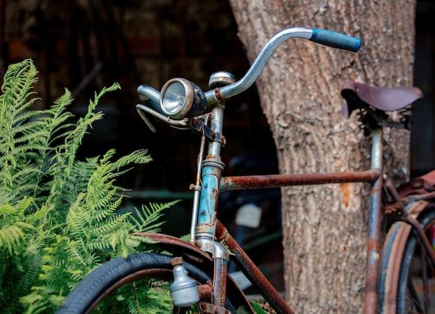 Vecchia bicicletta arrugginita vicino al cespuglio di felce.