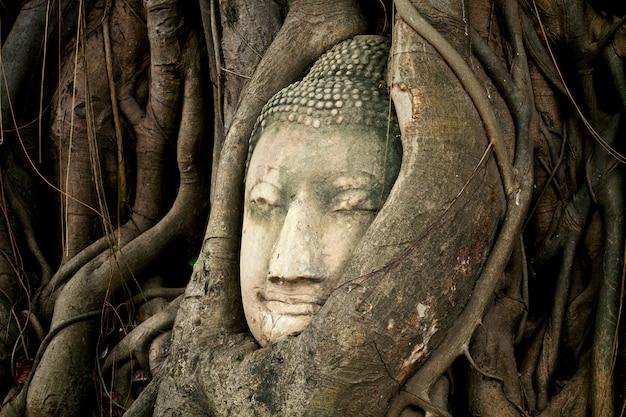 La vecchia testa di buddha dell'arenaria nelle radici dell'albero a wat mahathat, ayutthaya, tailandia