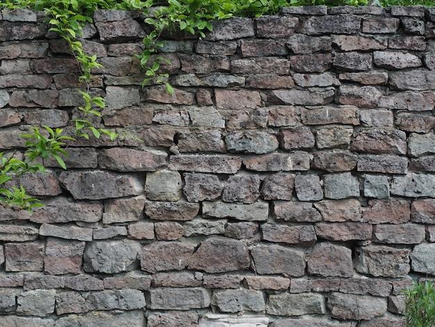 Vecchio muro di mattoni di pietra con le piante rampicanti verdi vista dalla parte anteriore