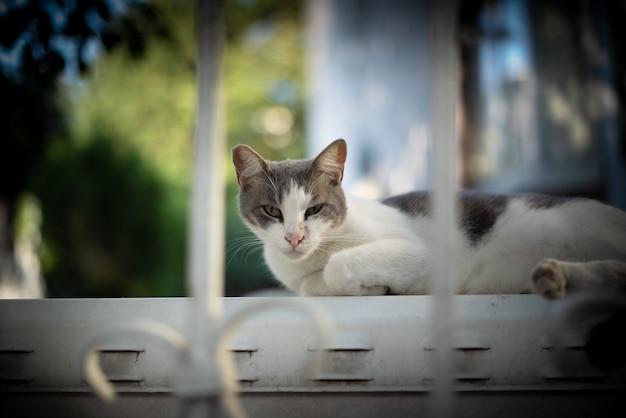 Vecchio gatto randagio