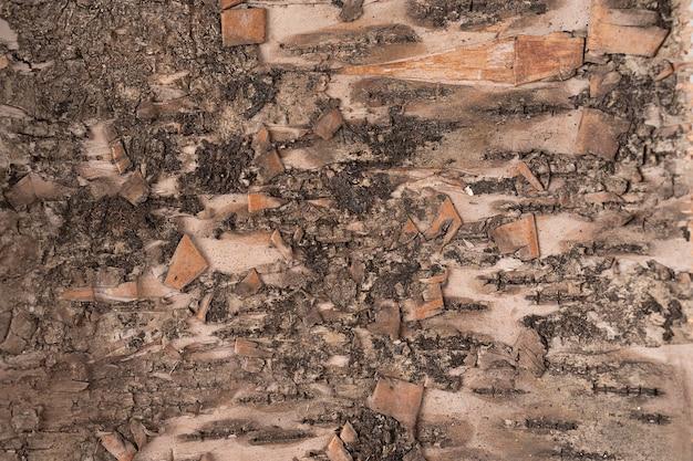 Vecchia struttura della corteccia di albero per carta da parati