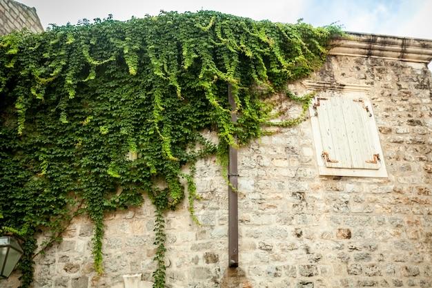 Vecchio muro di pietra bianco con finestra ricoperta di edera verde