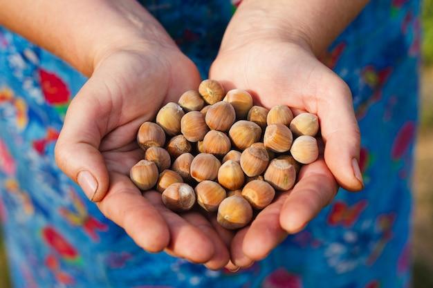 Una donna anziana tiene in mano un gran numero di noci. vista dall'alto. concetto di raccolta.
