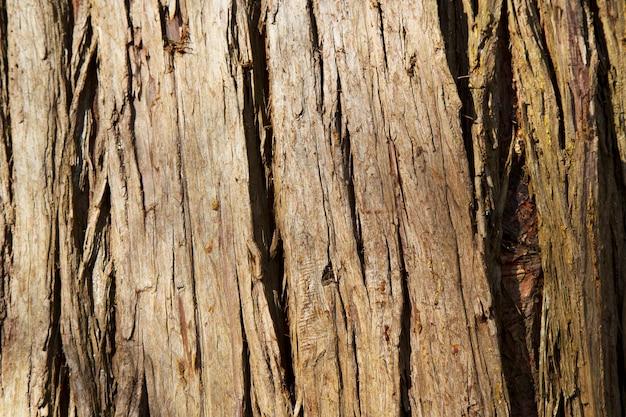 Motivo di sfondo texture albero di legno vecchio, tronco d'albero - sfondo