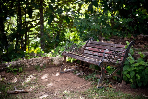 Vecchia panca in legno in una foresta verde