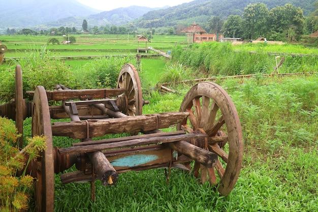 Vecchio carrello di buoi in legno nella risaia verde