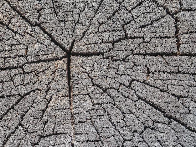 Vecchia superficie di legno con anelli annuali, crepe e consistenza