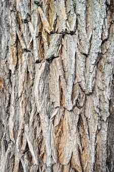 Vecchia struttura di corteccia di albero in legno. sfondo di un vecchio frammento di legno