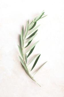 Ramo d'ulivo al centro di sfondo bianco