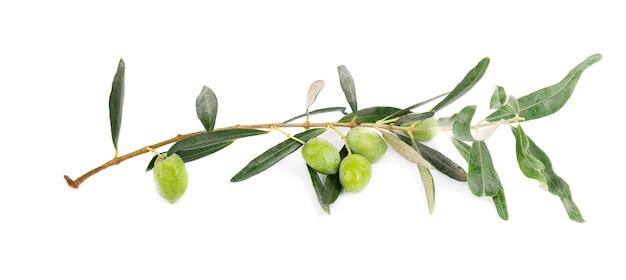 Ramo d'ulivo isolato su sfondo bianco. olive verdi con foglie.