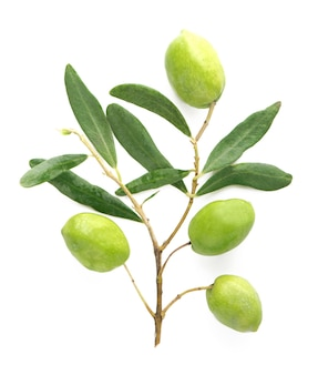 Frutta oliva e foglie di olivo su uno sfondo bianco.