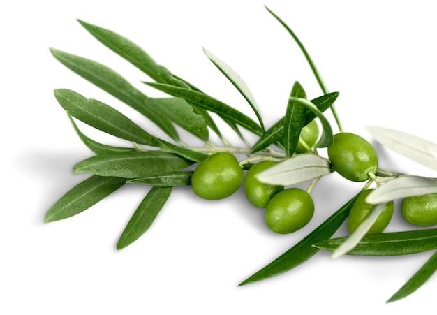 Olive sul ramo di olivo sullo sfondo.