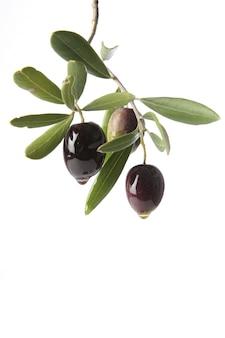 Olive trasudano puro olio extravergine di oliva simbolo della produzione ecologica