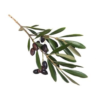 Olive su sfondo bianco