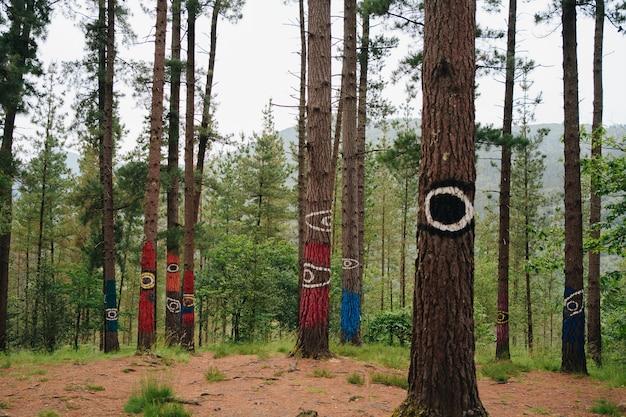 La foresta di oma nei paesi baschi