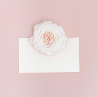 Una bella rosa bianca fiore e carta spazio vuoto su sfondo rosa pastello.
