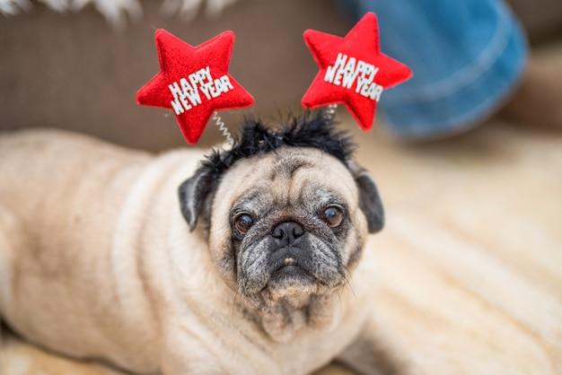Un simpatico e grazioso carlino o animale domestico a casa che indossa una fascia con le orecchie dicono felice anno nuovo - cane felice che si diverte