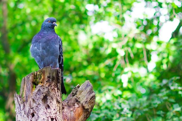 Una colomba nel parco su un albero. copia spazio