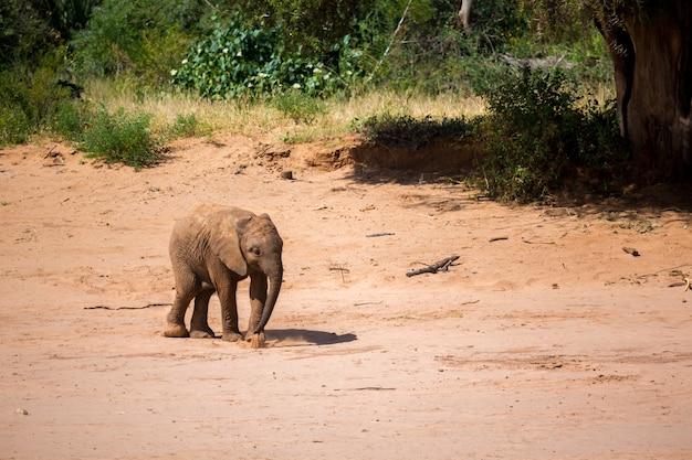 Un piccolo elefantino è in piedi sulla riva di un fiume
